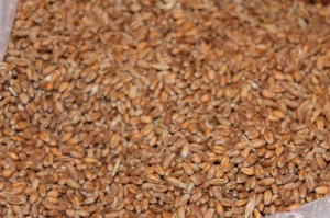 Корм для птиц зерно пшеницы