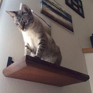 Полка для кошек на стену 2113